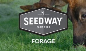 FORAGE PLUS