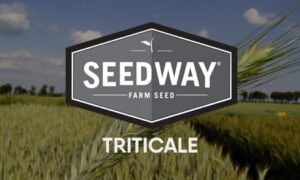 FLEX 719 WINTER FORAGE TRITICALE