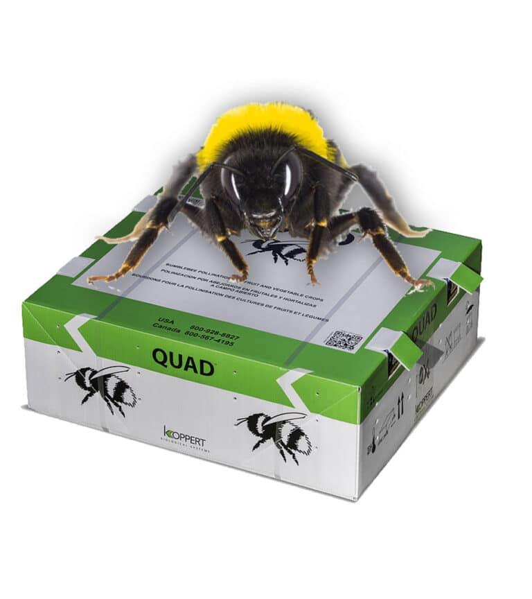 A box of Quad Bumblebees